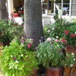 Floreiras – arranjos de flores com plantas para jardineiras