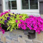 Plantas em Vasos Grandes e Jardineiras: Dicas de Cuidados