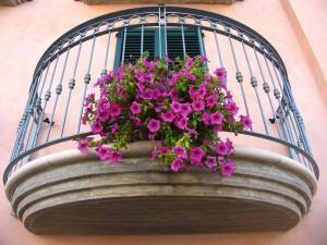 Dicas para plantas em vasos grandes e jardineiras