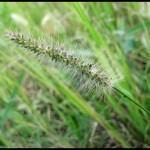 Como controlar ervas daninhas na horta, vasos ou jardim?