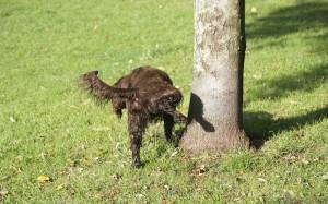Como ensinar seu cachorro a fazer xixi no lugar certo?