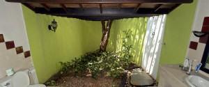 Plantas de interior para o banheiro!