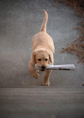 treinamento de cães - adestramento