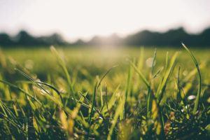 Grama: Como Plantar