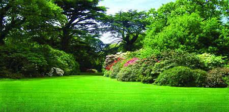 grama-jardim