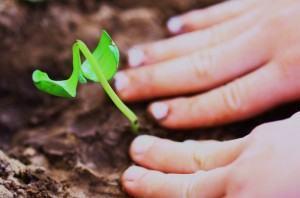 Fertilidade do solo -  plantando