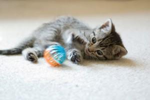 Filhote de gato como cuidar