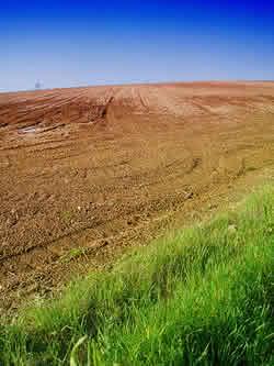 Fertilidade do solo - terra