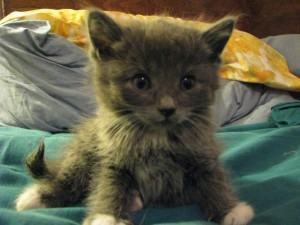 Filhote de gato... o Rei do pedaço!