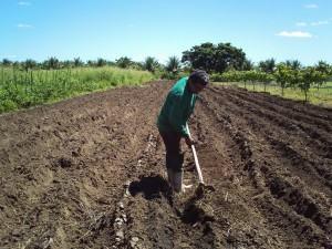Umidade e nutrientes -  Preparo do solo