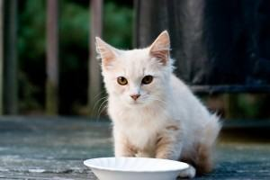 Alimentação de Cães e Gatos, o leite acabou...