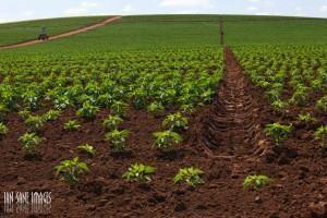 Fertilidade do solo - terra e plantio