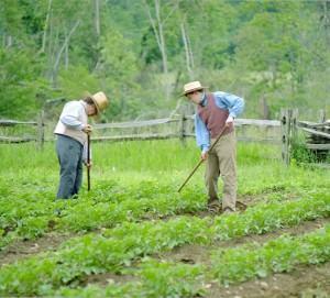Solos para cultivo!