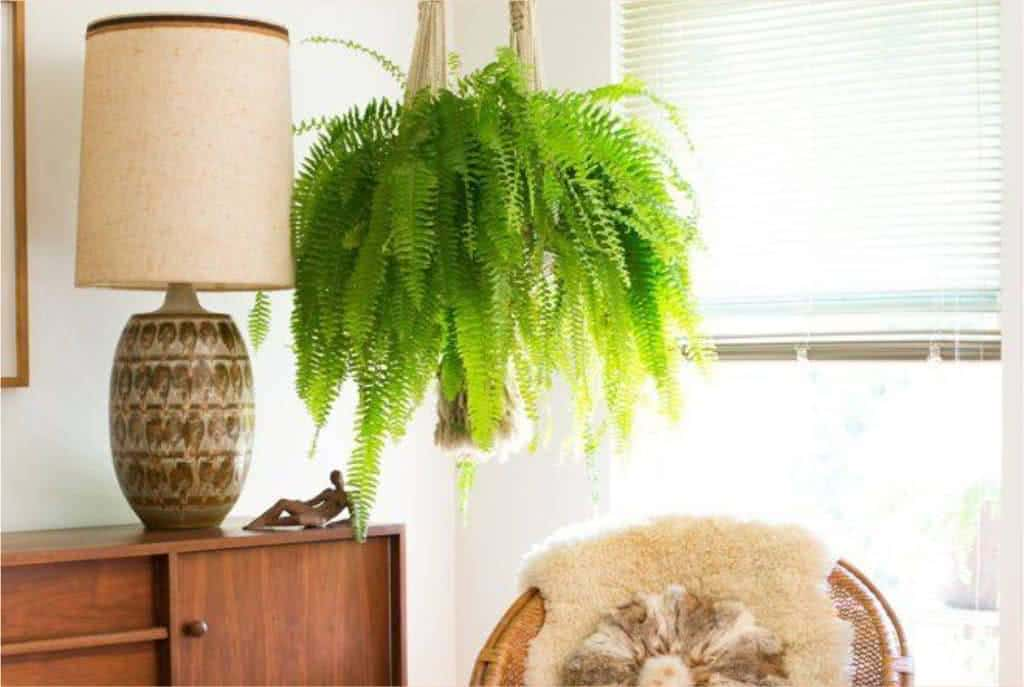 Plantas pendentes para o interior da casa for Abono para plantas de interior