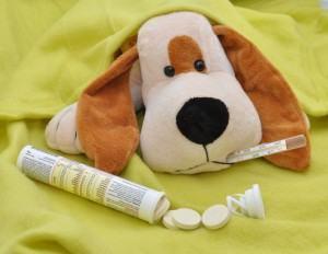 Medicamentos humanos e remedios para cachorro