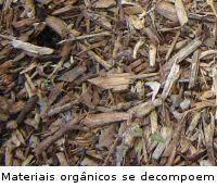 Coberturas de solo - Mulchcobertura organica