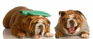 Medicamentos humanos são perigosos para cães e gatos!