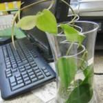 Vaso de vidro com filodendro