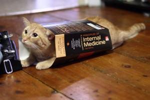 Medicamentos humanos e remedios para gatos