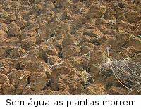 Coberturas de solo - Mulch  terra