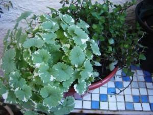 Arranjos com plantas de interior