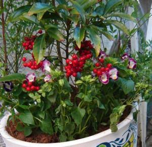 Arranjos de Plantas em Vasos Grandes: Como Fazer