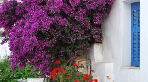 Jardins de Beira Mar: Arbustos