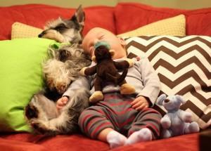cachorro e bebe