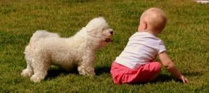 Pets e Bebês: Como Lidar