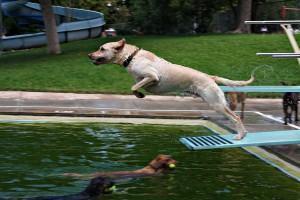 hotel de cachorros, cães fazendo atividades físicas na piscina