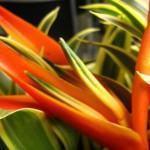 Arranjo de Ikebana: Como Fazer