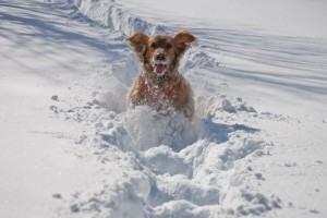 cachorros de pelo longo são naturalmente protegidos do frio