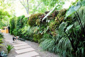 Como Fazer um Jardim Vertical ou Muro Vegetado