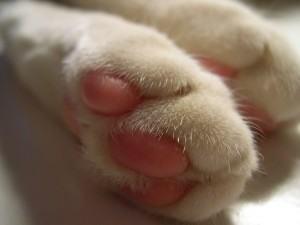 Como evitar que seu gato arranhe a mobília, controle das unhas