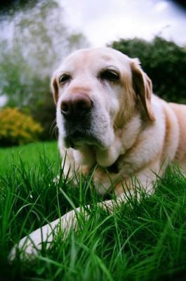 Você sabe reconhecer um cachorro com gripe?