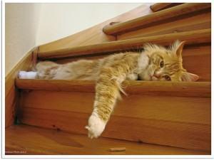 Como evitar que seu gato arranhe a mobília, tedio