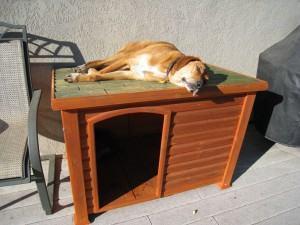 Requisitos para a Casinha do cachorro ou Canil !