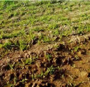 A análise do solo e as ervas daninhas