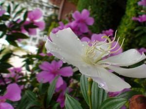 Um Jardim na Primavera: Plantas que Florescem nesta Época