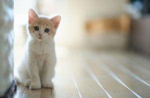 Como Evitar que seu Gato Marque Território em Casa