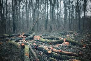 France, Pas-de-Calais : forêt de Vimy