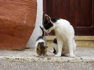 Greek Cat Family
