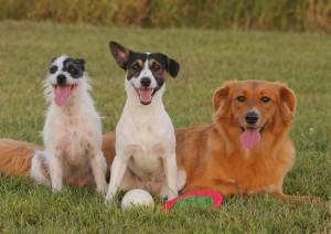 Carrapatos – como tratar nos cachorros e gatos
