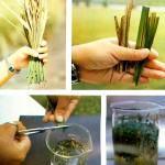 Extratos glicólicos … como podem ser feitos, propriedades