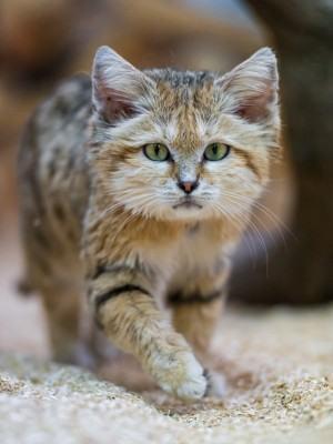 evitar que seu gato marque território