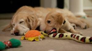 brinquedos para cachorros