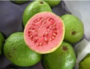 Goiabeira (Psidium guajava) -aberta