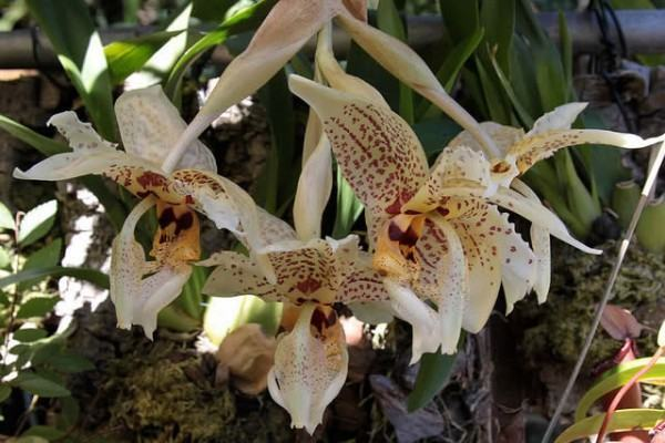 orquidea-4