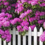 Plantas de Pequeno Porte para Muros do Jardim