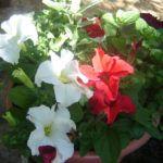 Arranjo de Flores com Aromáticas para os Dias de Festa